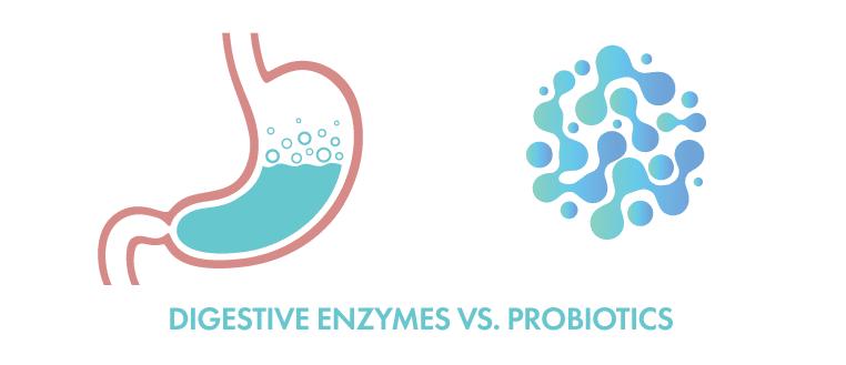 digestive enzymes vs. probiotics